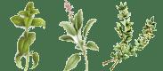Les plantes cultivées à la Savonnerie du Mas Sophia, savons Bio en Ardèche