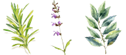 Les plantes cultivées au Mas Sophia, savons Bio en Ardèche